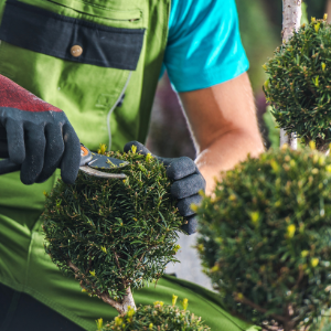 Why Is It Important To Have Garden Maintenance Services?